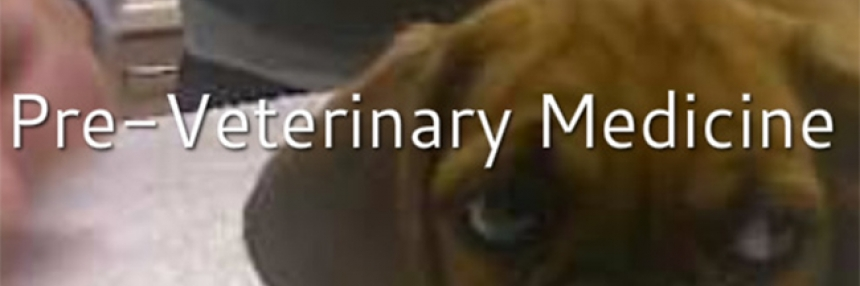 "Pre-veterinary Medicine Header: A dog in a vet office with words ""Pre-veterinary medicine"""